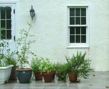 herb plants 2
